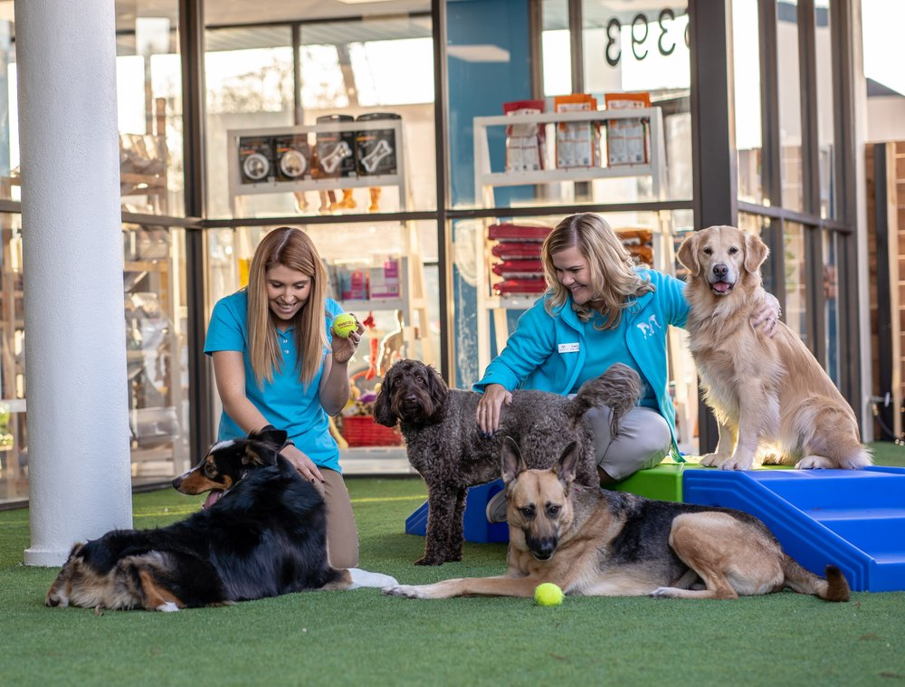 Meadowlake Pet Resort & Training Center - Galleria Area: 6393 Richmond Ave, Houston, TX