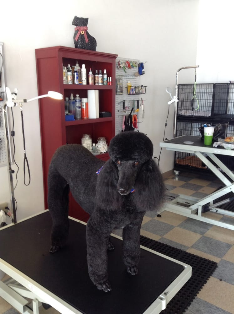 We can make your pet beautiful too just like sully yelp for Dog grooming salons near me