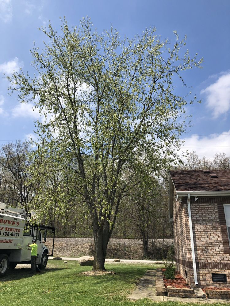 Brown's Tree Service: 201 S Morton St, Franklin, IN