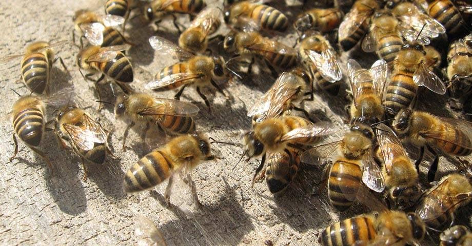 Bat Bee and Hornet Removal Services: 2701 Goodes Bridge Rd, Richmond, VA