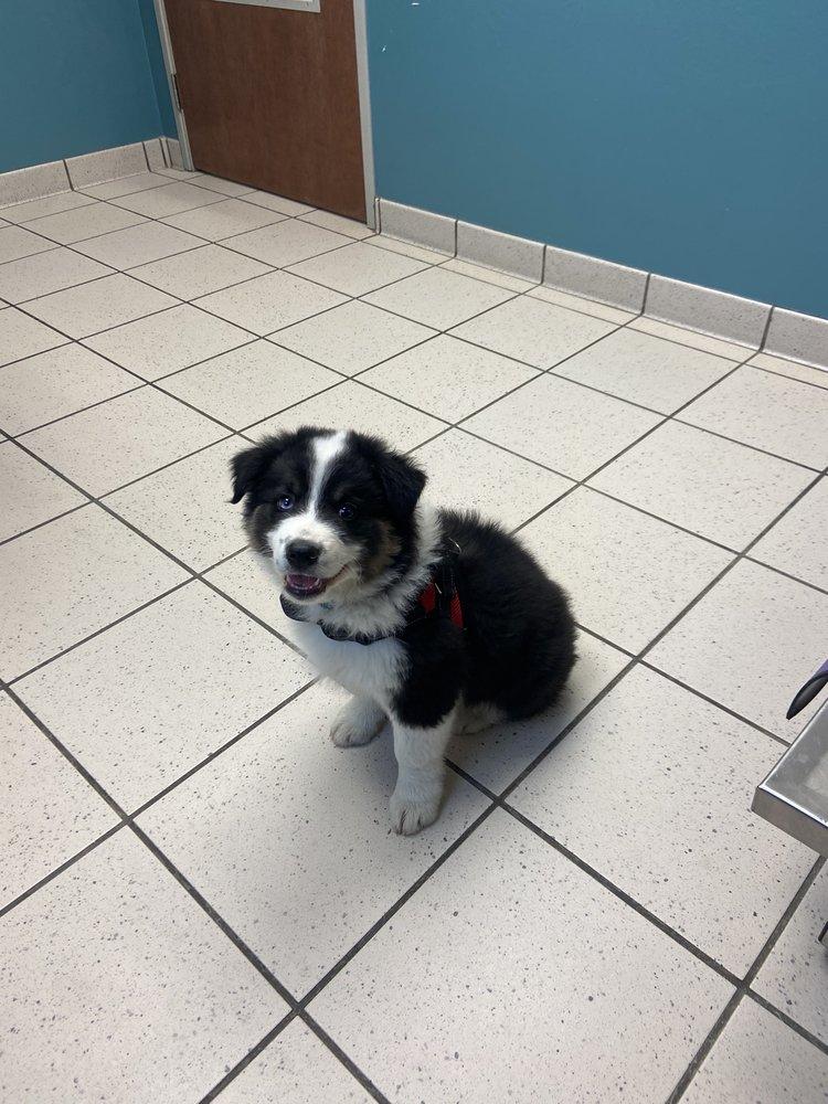 Soldotna Animal Hospital: 42479 Sterling Hwy, Soldotna, AK