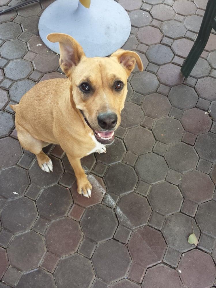 Service Dog Training San Jose