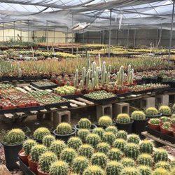 Photo Of Bach S Cactus Nursery Tucson Az United States