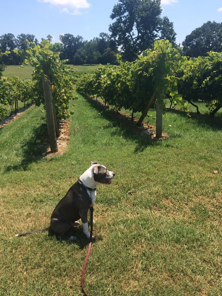 Devault Family Vineyards: 247 Station Ln, Concord, VA