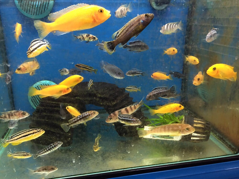 filthy fish tank with too many fish in one tiny tank this