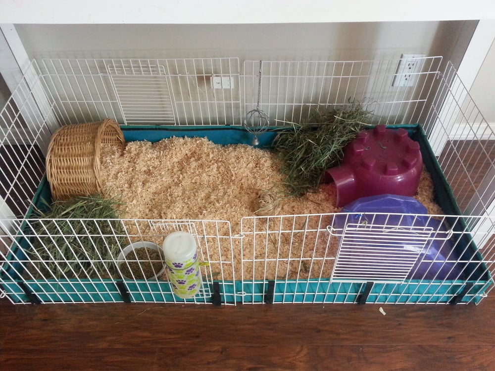 Midwest cage set up and ready for a trio of female guinea for How to guinea pig cage
