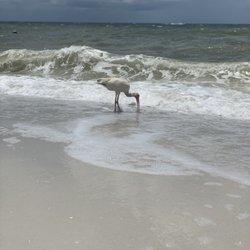 Pelican Bay - 5455 Tamiami Trl N, Naples, FL - Phone Number