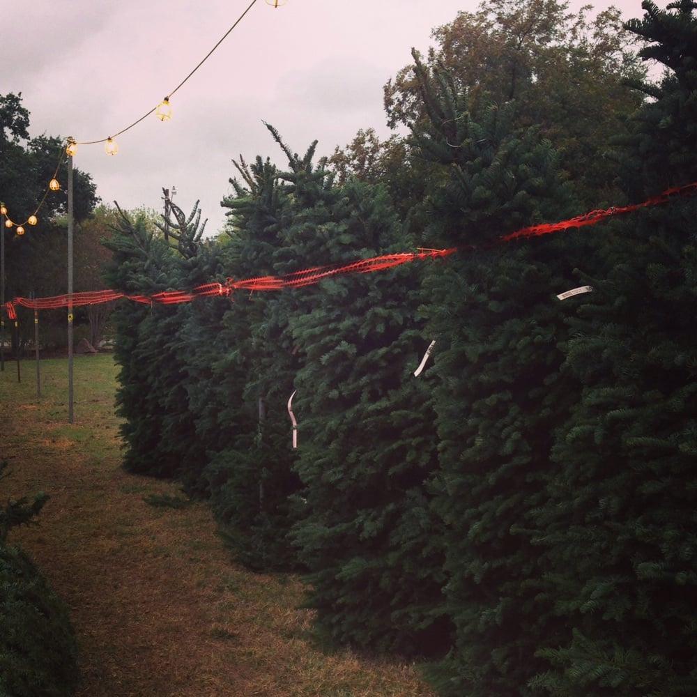 Alamo Heights Optimist Club Christmas Trees: Austin Hwy, San Antonio, TX