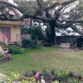 Live oak tree at the cedar key bed and breakfast