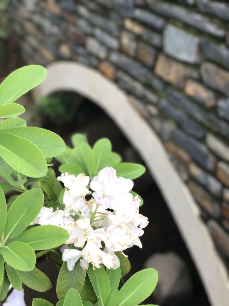 Sarah P Duke Gardens - 660 Photos & 207 Reviews - Botanical Gardens ...