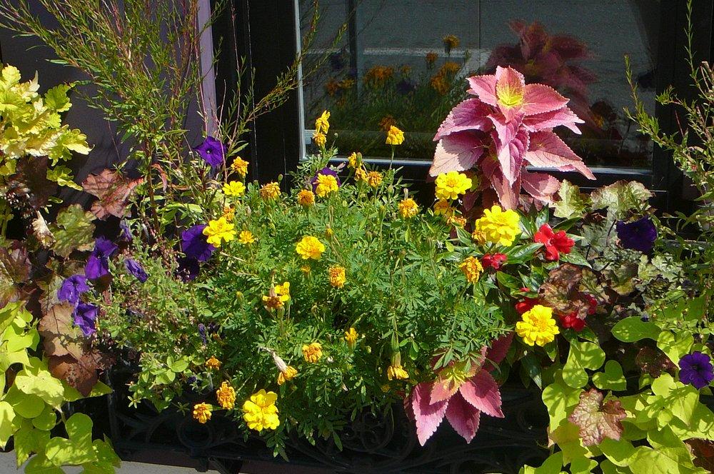 Gardening with Jenny: 20 Matignon Rd, Cambridge, MA