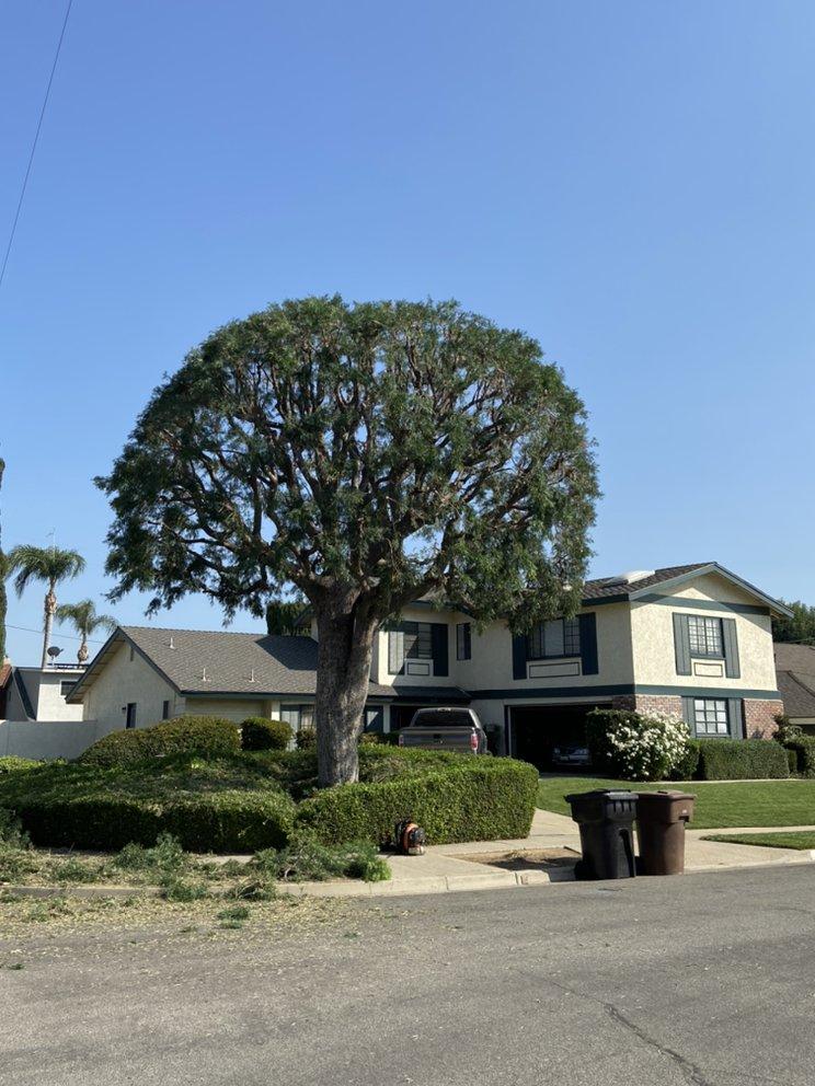 J.Rodriguez Tree Care Maintenance