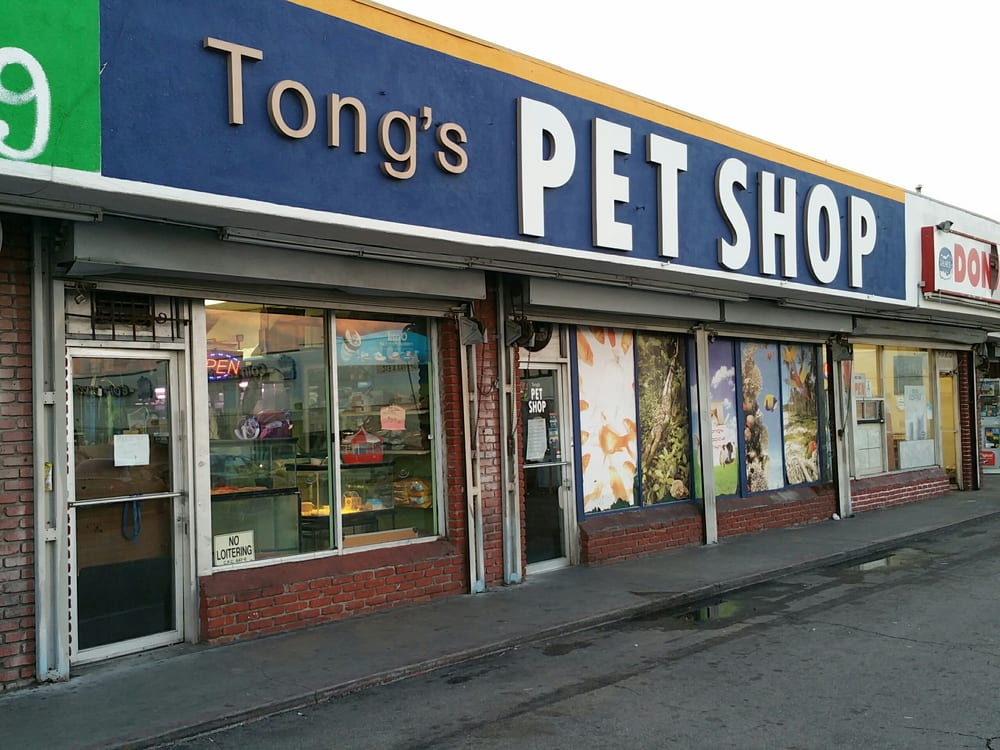 Tong s tropical fish pet and supplies 20 photos 19 for Local fish stores