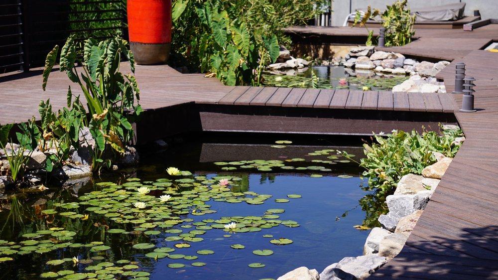 The Pond Gnome
