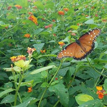 San Antonio Botanical Garden   897 Photos U0026 125 Reviews   Botanical Gardens    555 Funston Pl, Mahncke Park, San Antonio, TX   Phone Number   Yelp