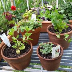 Mahoneys Garden Centers 16 Photos 60 Reviews Nurseries