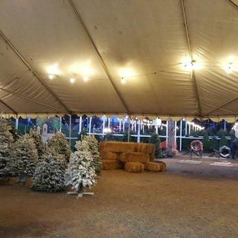 photo of pinery christmas trees bonita ca united states - Pinery Christmas Trees