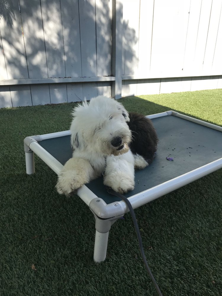 Specialty Dog Training