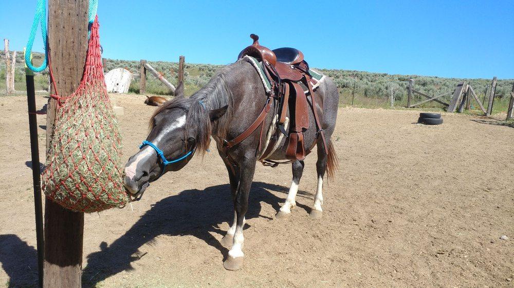 Herrera's Gaited Horses: 244 E Rich Ln, Blackfoot, ID