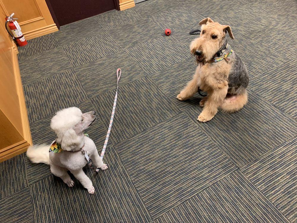 Fresh Pup Mobile Pet Spa