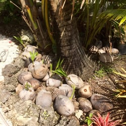 Going Bananas 66 Photos 14 Reviews Nurseries Gardening 24401 Sw 197th Ave Homestead Fl Phone Number Yelp