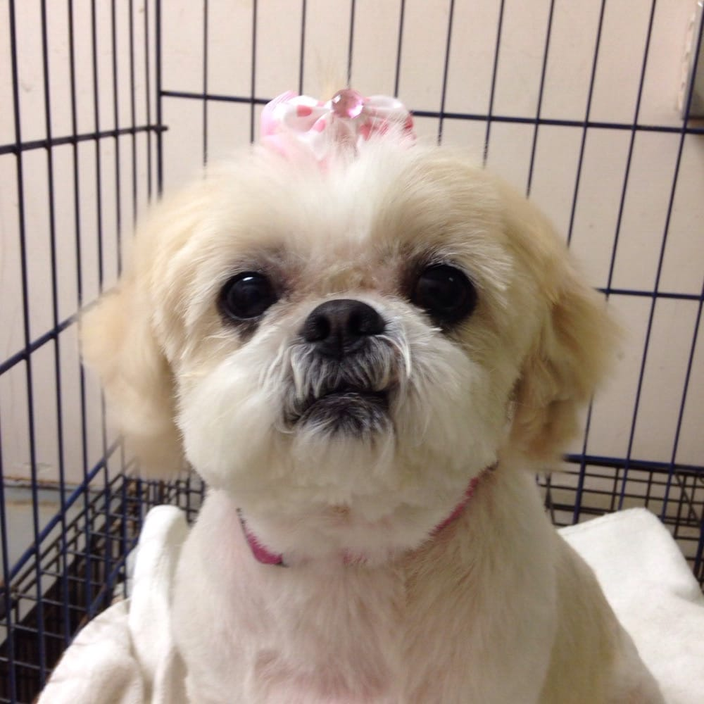 Image Result For Dog Grooming Schools