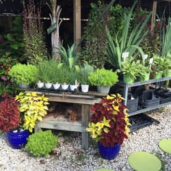 Earl S Garden Nursery Nurseries Gardening 3627 Wests Blvd Tampa Fl Phone Number Yelp