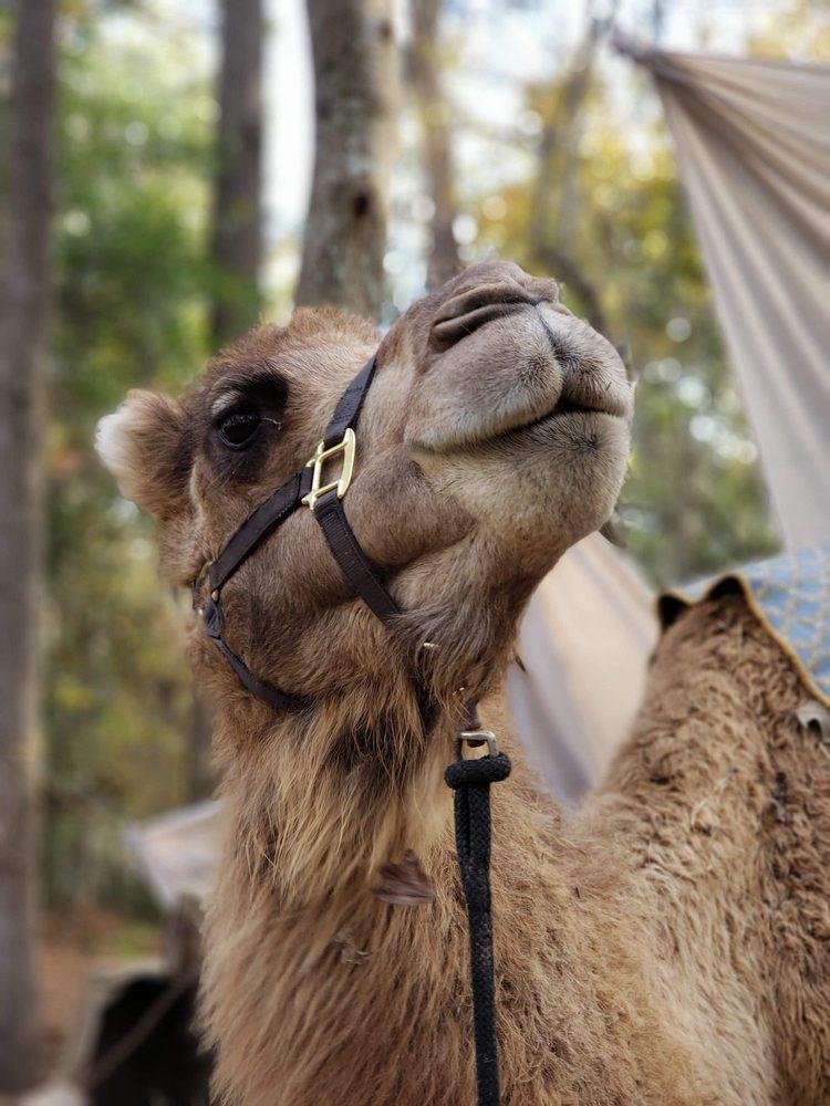 Sam's Path Petting Zoo: 2210 Oak Crest Dr, Hartwell, GA