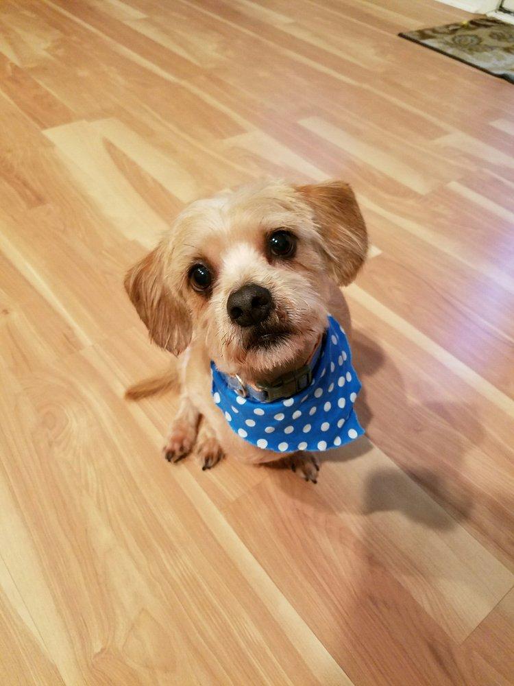Furry Tails Pet Salon: 162 Sunlite Ln, Mount Vernon, KY