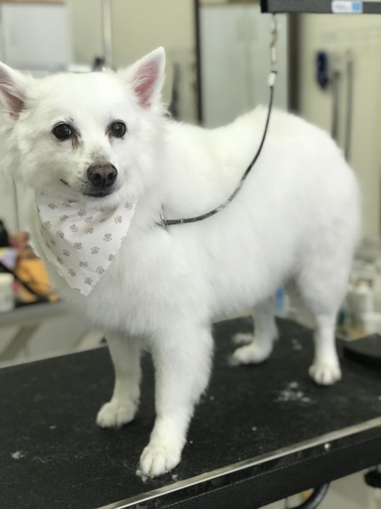 Misty's Grooming and Boutique