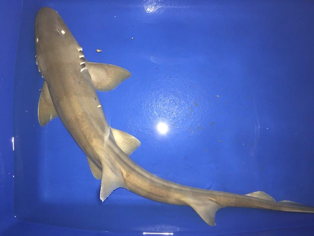 bamboo shark tank - photo #32