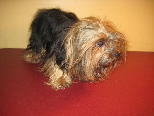 Val's Pretty Pets: 2324 Platt Springs Rd, West Columbia, SC