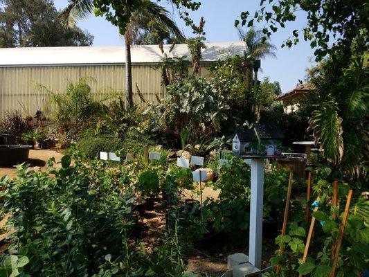 El Plantio Nursery 1322 San Pasqual Valley Rd Escondido Ca Nurseries Mapquest