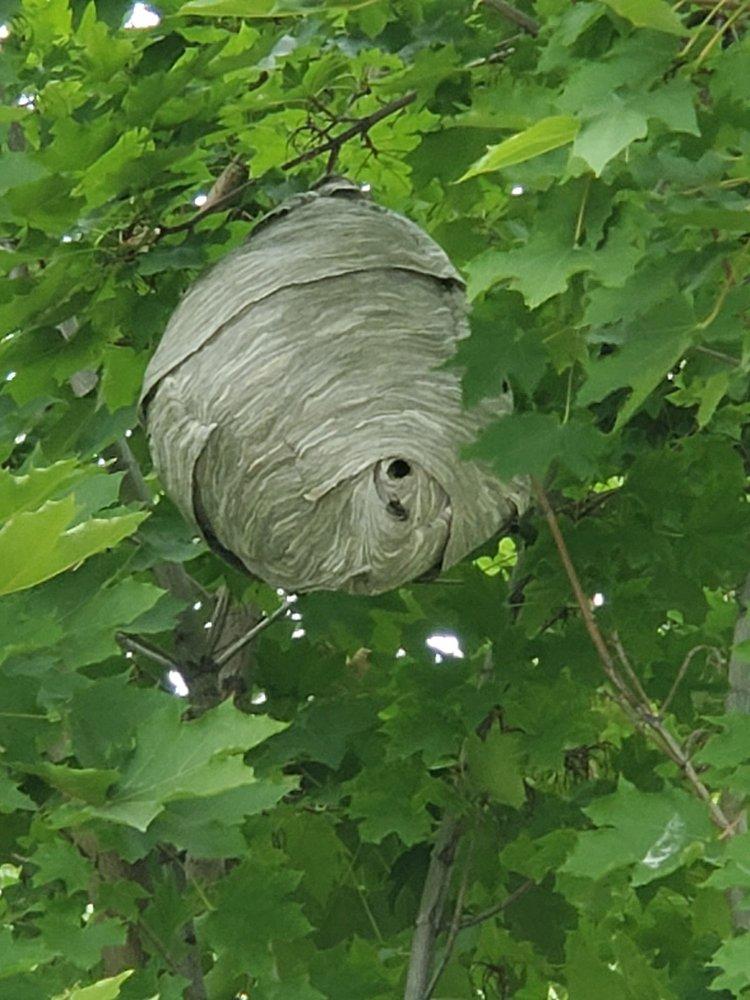 Bullseye Pest Control: 205 West Blvd, New Plymouth, ID