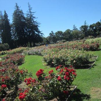 San Jose Municipal Rose Garden 2269 Photos 352 Reviews