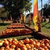 Jackson's Pumpkin Farm: 6425 Rte 17C, Endicott, NY