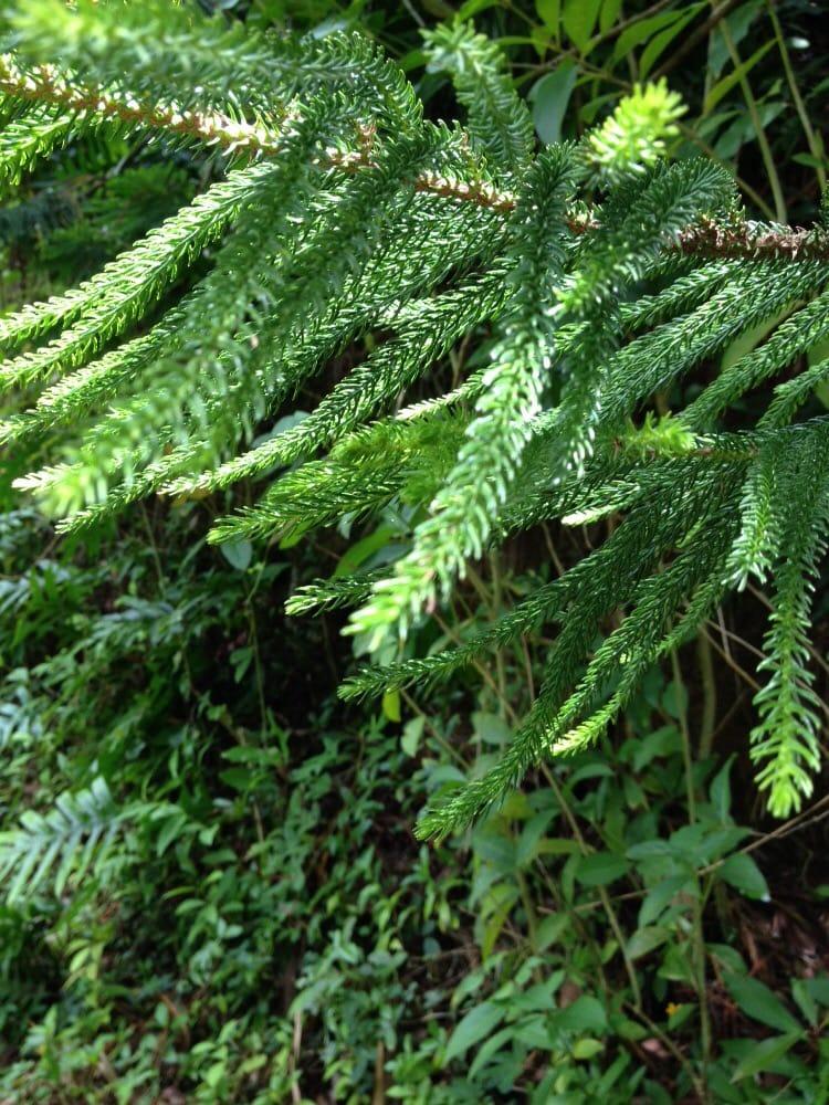 Photos For Ho 39 Omaluhia Botanical Gardens Yelp
