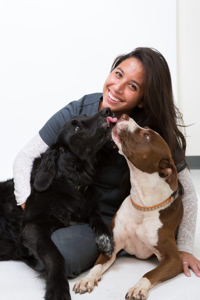 Gold Coast Mobile Veterinary Care