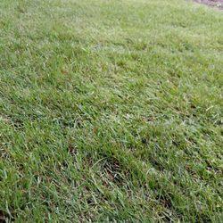 Garten Und Landschaftsbau Kiel d s garten und landschaftsbau 10 photos landscaping hangstr