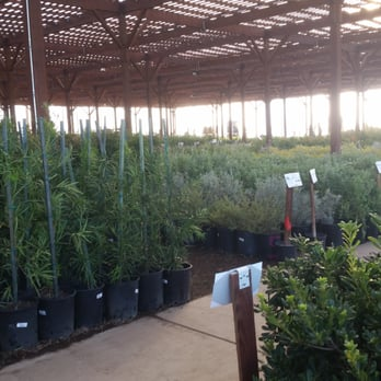 Photo Of Star Nursery Las Vegas Nv United States
