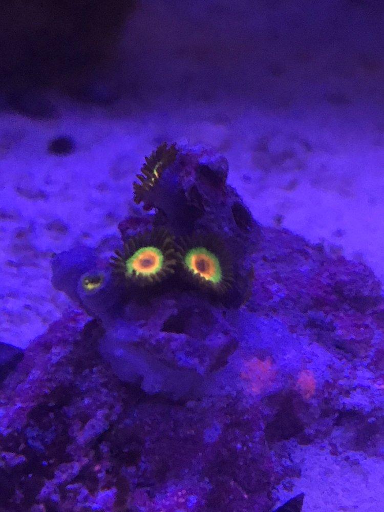 Pure Reef: 12900 Hwy 9 N, Alpharetta, GA