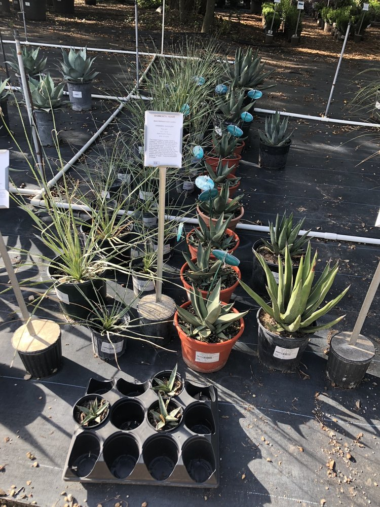 Barton Springs Nursery: 3601 Bee Caves Rd, West Lake Hills, TX
