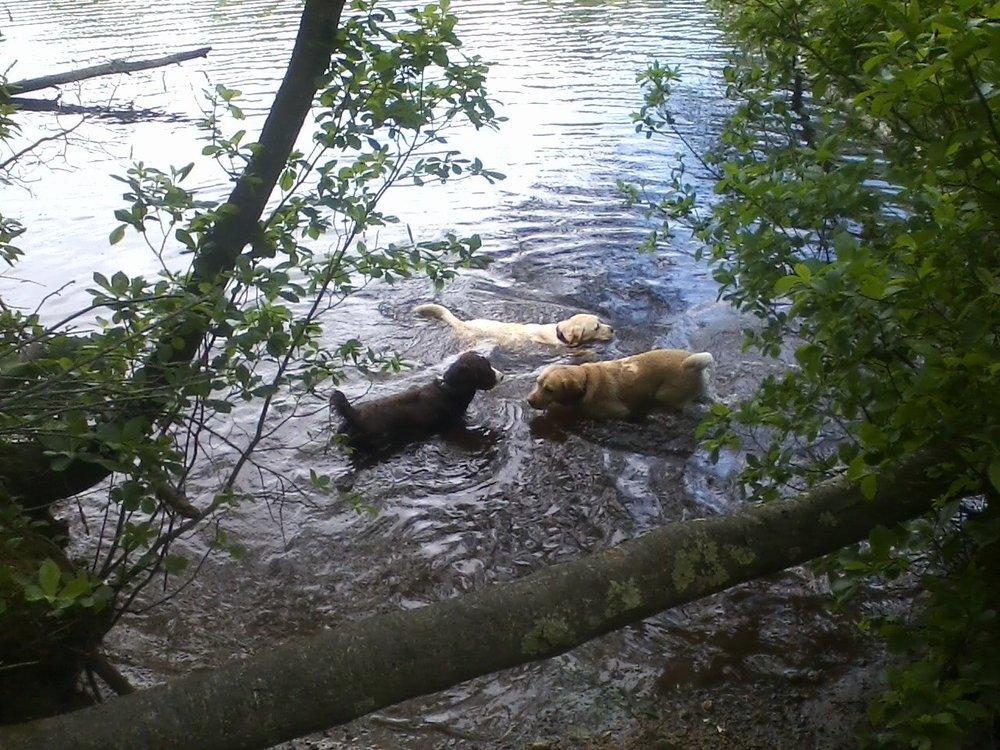 Wagalicious Walks, LLC Dog Walking and Pet Sitting: 242 Winthrop St, Framingham, MA