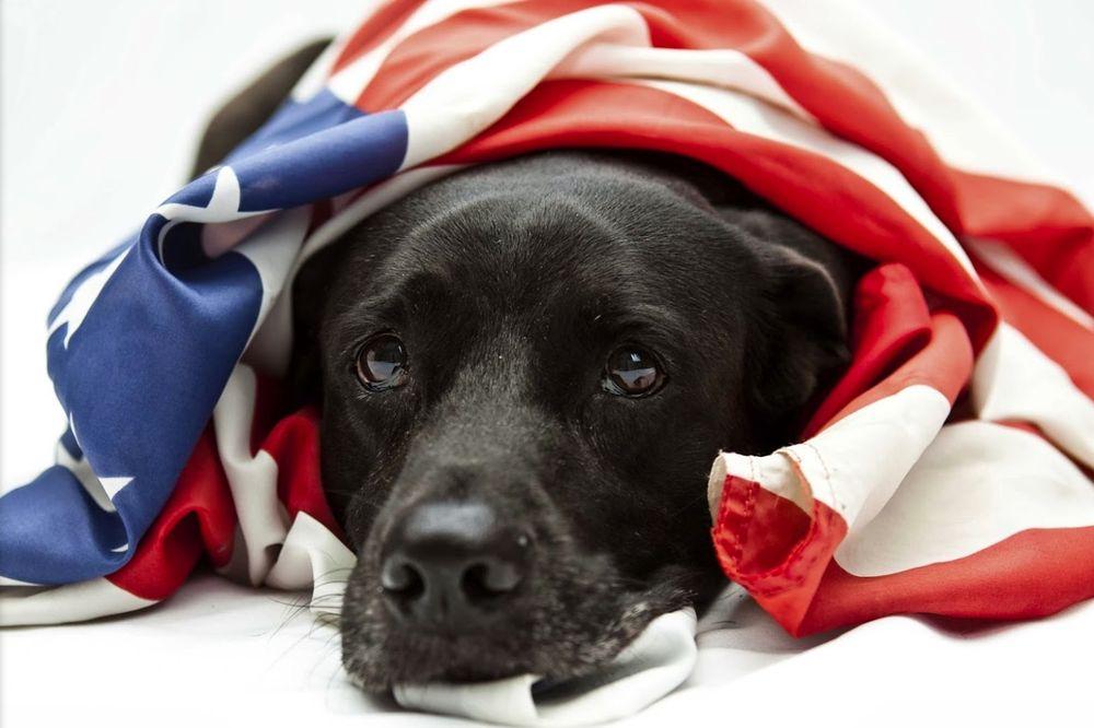 Dog Guard of Southern Arizona