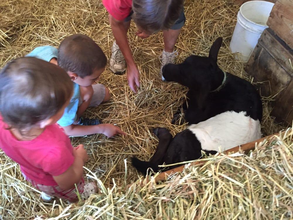 Grandpa Tiny's Farm: 7775 Weiss St, Frankenmuth, MI