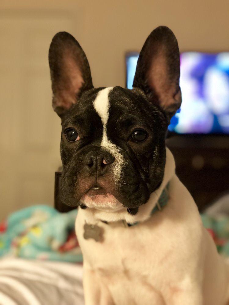 Houston Dog Behavior and Training