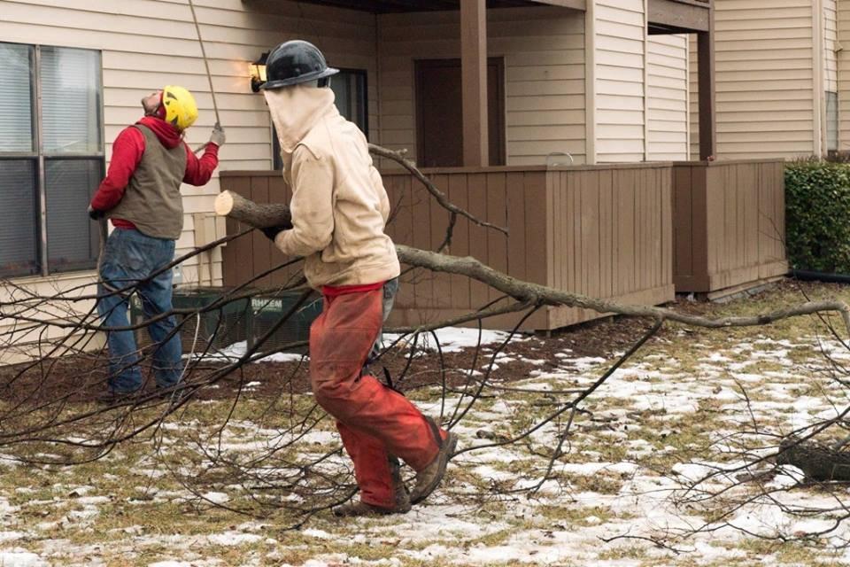 Abundant Tree Care Services