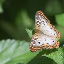Photo Of Butterfly Wonderland   Scottsdale, AZ, United States