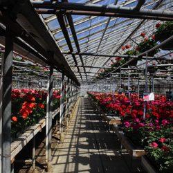 AJ Rahn Greenhouses - 31 Photos & 23 Reviews - Nurseries & Gardening