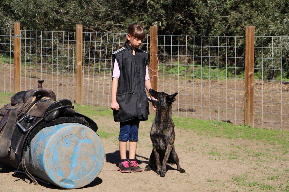 Coast Canine: 33 Quail Way, Watsonville, CA